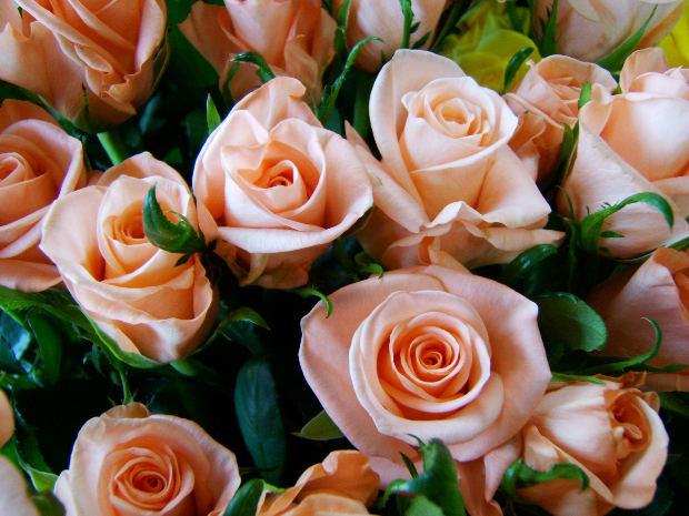 Regala flores a domicilio con Caluna