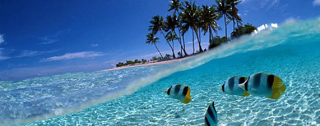 Havaning ofrece una amplia gama de productos para su estancia en Cuba, visitenos en http://www.havaning.com o contacte con nosotros a través de nuestro correo booking@havaning.com nos encontramos a su disposición.