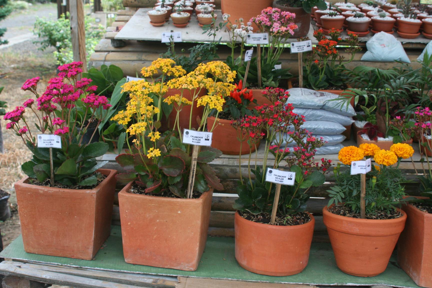 Ideas para montar tu propia floristería